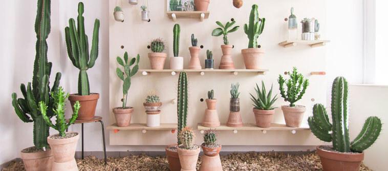 la décoration tendance avec des cactus