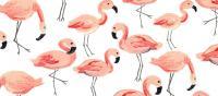 decoration-flamingo-tendance-2018